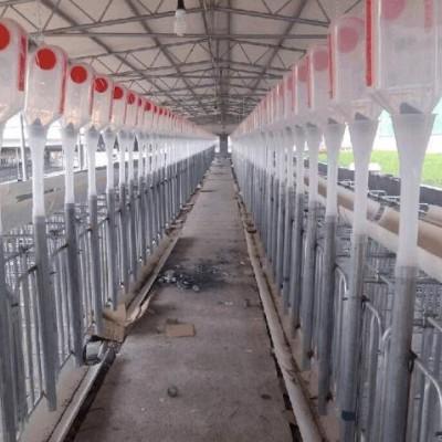 自动喂料料塔 料塔生产猪舍料线15吨镀锌板料塔 饲料料塔