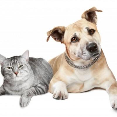 高加索犬怎么养?饲养方法看这里!