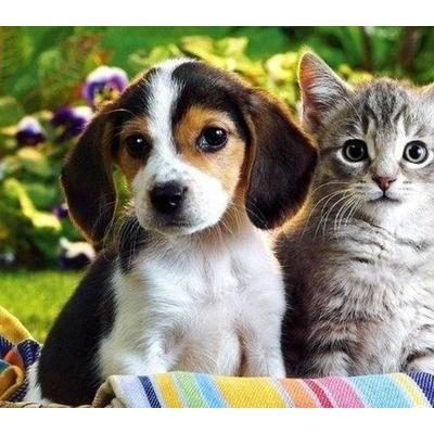 给猫洗澡的那些事你都了解吗?