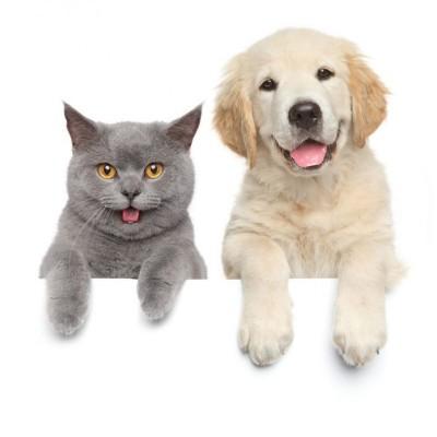 给暹罗猫梳理毛发 这三件事你要注意!
